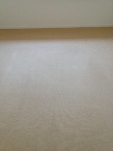 Carpet Cleaning and Pest Control Maroochydore